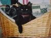 Katzenbaby Nela und Hundeweibchen Winni im Katzenkörbchen
