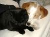 Kätzin Amelia und Parso Russell Terrier Mischa
