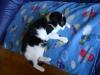 Katzenbetreuung Wien / Katzenkörper - Der Körper einer Katze ist an seine Lebensweise ideal angepasst. Katzen sind gelenkig und mit hervorragenden Reflexen ausgestattet, die ihnen beim Jagen zugute kommen.