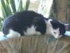 Katzenbetreuung Wien / Katzenkörper - Leichter Knochenbau und große Elastizität zeichnen das Skelett der Katze aus und sind für Geschmeidigkeit und Wendigkeit verantwortlich. Dabei besitzt die Katze etwa 40 Knochen mehr als ein erwachsener Mensch.