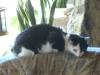 Katzenbetreuung Wien / Katzenkörper - Ihre Halswirbel sind besonders drehbar und mit der starken Nackenmuskulatur verbunden. Die beweglichen Lendenwirbel ermöglichen dem Tiere eine Drehung des Körpers in der Luft.