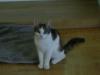 EKH Kittenbetreuung Wien - Hauskatzen betreut in Wien