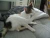 Baby Katzen Betreuung Wien - Vorortservice