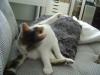 Bauernkatzen betreut in Wien - Vorort Betreuung Wien