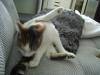 Katzensitter Service Wien - Vorortbetreuung von Bauernkatzen