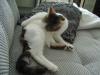 Bauernkatzenbetreuung Wien - Catsitter Betreuungsdienst Wien