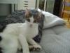 EKH Catsitting Wien - Katzen Betreuungsdienst Wien