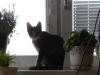 Vorort Bauernkatzen Service Wien - Betreuungsdienste Wien