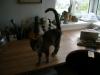 Cat Sitter Wien - Cats