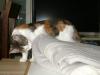 Kompetente Hauskatzen Betreuung Wien - Katzensitting Wien