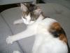Hauskatzen Vorortsitting Wien - Bauernkatze