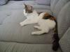 Hauskatzen Tagesbetreuung Wien - Cat Daysitter Wien