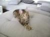Catservice Wien - Katzenbetreuung