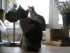 Kittensitter Wien - Babykatzen betreut in Wien