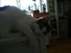 Baby Katzen - Betreuung Wien
