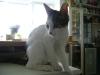 Junge Katzen betreut in Wien - junge Hauskatzen Betreuung Wien