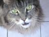 Kittenbetreuung Wien - Hauskatzen Babybetreuung Wien