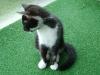 Katzenbetreuung Wien - Katzenbaby / Im Gegensatz zum Hund unterwirft sich eine Katze in der Regel nicht.