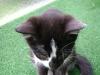 Katzenbetreuung Wien - Katzenbaby / Sie macht, was sie will und wann sie es will.