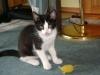 Katzenbetreuung Wien - Katzenbaby / Die sogenannte sensible Phase dauert ungefähr von der zweiten bis zur siebten Woche.
