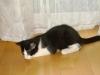 Katzenbetreuung Wien -  Kitten / Im Gegensatz zu den erwachsenen Tieren, sind sie völlig hilflos und daher auf die Fürsorge der Mutter und / oder des Menschen angewiesen.