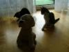 Katzenbetreuung Wien -  Kitten / Sind die Neugeborenen kleiner haben sie oft keine guten Überlebenschancen.