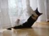 Katzenbetreuung Wien -  Kitten / Die Beziehung der Katze zu Menschen wird von genetischen und erlernten Einflüssen beeinflusst, entsprechend kann der Mensch für sie Feind, Nahrungslieferant oder Sozialpartner bedeuten, Letzterer kann wiederum Spielkamerad, Mutterersatz oder vertraute Bezugsperson sein.