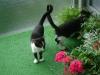 Katzenbetreuung Wien -  Kitten / Sie besitzt hoch spezialisierte Anlagen, die genutzt werden wollen (müssen).