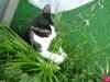 Katzenbetreuung Wien - Kitten / Das elastische Skelett der Katze und der ausgeprägte Gleichgewichtssinn erlauben so wendige, elegante Bewegungen, dass Balancieren und die Eroberung der dritten Dimension ein Grundbedürfnis darstellen.