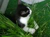 Katzenbetreuung Wien -  Kitten / So hält die Katze Muskulatur und Sinne in Schwung.