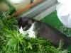 Katzenbetreuung Wien -  Kitten / Nicht auslebbares Beutefangverhalten führt oftmals zu umadressierter Aggression.