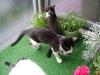 Katzenbetreuung Wien -  Kitten / Katzen sind, obwohl große Individualisten, durchaus gesellig.
