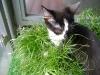 Katzenbetreuung Wien -  Kitten / Das zeigt sich deutlich in ihrem Sozialverhalten: Katzenversammlungen - die den menschlichen Nachbarn meist weniger Freude bereiten - gemeinsame Pirschgänge und gegenseitiges Putzen können hier als Beweis gelten.