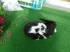 Katzenbetreuung Wien -  Kitten / Die oft zitierte Feindschaft zwischen Hund und Katze entsteht aus unterschiedlichen Verhaltensweisen und einer konträren Körpersprache.