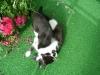 Katzenbetreuung Wien -  Kitten / Katzen verständigen sich mit Artgenossen, anderen Tieren und Menschen in ihrer eigenen Sprache, die sich aus Lauten, Bewegungen und Mimik zusammensetzt.