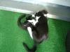 Katzenbetreuung Wien -  Kitten / Der Schwanz der Katze ist sozusagen ihr Stimmungsbarometer: Allein aus seiner Haltung kann man erkennen, was sie gerade empfindet.