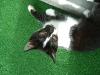 """Katzenbetreuung Wien -  Kitten / Katzen leben in lockeren Verbänden, sogenannten """"Kolonien"""", aus unter sich verwandten oder zugewanderten Katzen."""
