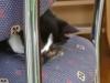 Katzenbetreuung Wien -  Kitten / Dabei nutzen die noch blinden und tauben Kätzchen ihre empfindliche Nase zur Orientierung.