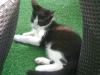 Katzenbetreuung Wien - Katzenbaby / Kätzchen sind bereits von Natur aus mit verschiedenen Verhaltensweisen bzw. Reflexen ausgestattet.