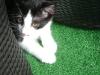 """Katzenbetreuung Wien - Katzenbaby / Das Aufspüren und """"Festhalten"""" der Zitzen gehört genauso zu diesen Reflexen wie der Saugreflex zur Milchaufnahme."""