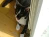 Katzenbetreuung Wien - Katzenbaby / Die Kätzchen drücken mit den Vorderpfoten in den Zitzenbereich und stimulieren so den Milchfluss der Mutter zusätzlich.