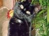 Katzen - Diese Gruppe umfasst die Säbelzahnkatzen und es ist möglich, dass Dinictis in Wirklichkeit den Säbelzähnern angehörte