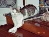 Katzen - Die Katze wurde erst viel später domestiziert als der Hund und das Rind.