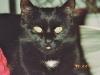 Katzen - die Schlange der Finsternis, Apep. Der ägyptische Name für die Katze hiess Mau