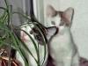 Katzen - Die Mitglieder einer Familie, deren Katze gestorben war, rasierten als Zeichen der Trauer ihre Augenbrauen.
