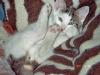 Katzen - Sie wurde einbalsamiert, mit kostbaren, bunten Bändern umwickelt und in den prächtigen Sarg gelegt.