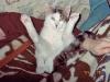 Katzen - Selbst heutzutage gibt es noch genügend Menschen, die glauben,