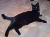 Cat Day Sitter - Hauskatzenservice