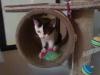 Cat Day Sitter - Katzenbaby betreut in Wien
