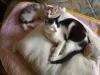 Cat Day Sitter - Bauernkatzen betreut in Wien